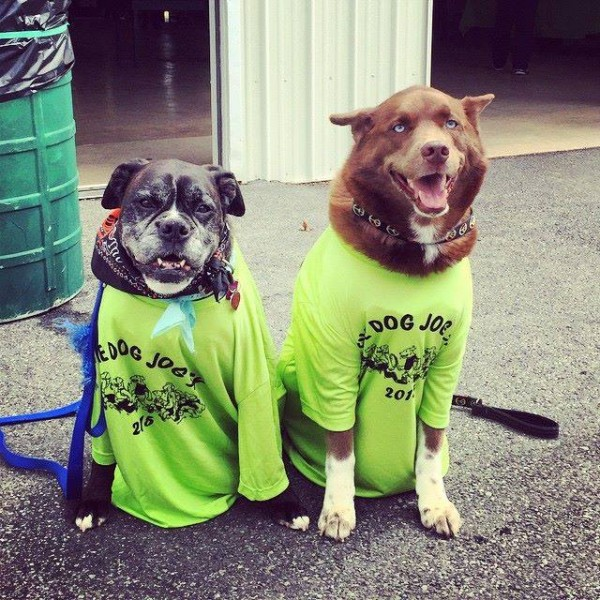 Dogs in Shirts