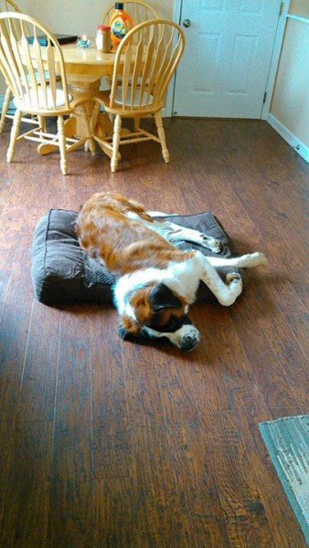 Sampson (now Stout) seems to be adjusting to his forever home quite well!