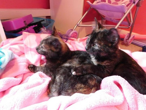 The kittens are doing great! They are now known as Whiskers and Jessie and they are so loved. Thank you!