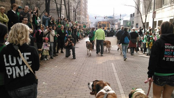 At the bottom of the picture is Stout (formerly Sampson from Pets Come First). We're walking in the Pittsburgh St Patrick's Day Parade with the Saint Bernard Club of Western PA! He had a great time, and was probably the most photographed participant.