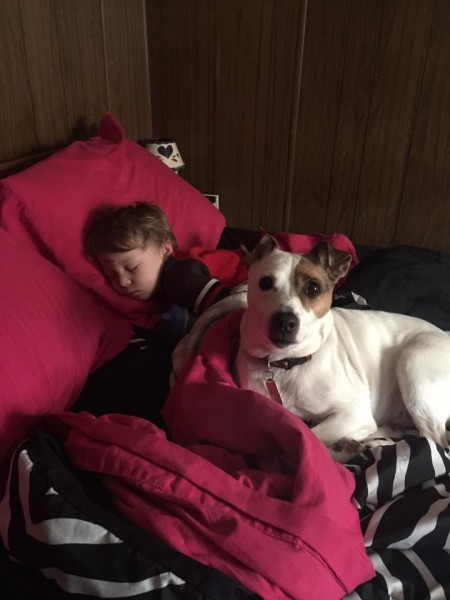 I adopted Bandit a little over a week ago, here's a picture of him, settled in quite well. As you can see, he's taken very well to my 2 year old son and they are the best of friends!!