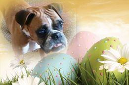 Gertie (fka Sarah) says, HAPPY EASTER everyone and thank you Pets Come First for saving me!