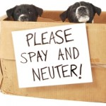 Spay & Neuter Vouchers!